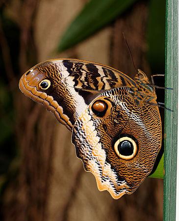 2015-10-24 13-42-35 papillon-hunawihr.jpg