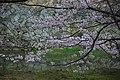 20160403 Himeji-Castle 3411 (26791736486).jpg