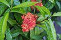 2016 Singapur, Ogrody botaniczne (006).jpg