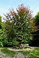 20170904 boom op Carolinaberg nabij Dieren.jpg