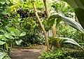 2018-06-18-bonn-meckenheimer-allee-169-botanischer-garten-regenwaldhaus-01.jpg