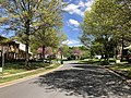 2019-04-20 13 08 24 Pin Oaks leafing out along Thorngate Drive near Lees Corner Road in the Franklin Farm section of Oak Hill, Fairfax County, Virginia.jpg