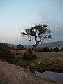 25-09-2013 Reñaca Alto (9934815836).jpg
