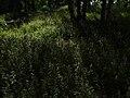 3.07.2012-2 - panoramio.jpg