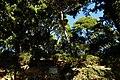 30.12.16 Dubrovnik Lovrijenac Gradac Park 43 (31607427370).jpg