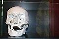 3D-print schedel Lamoraal van Egmont, Zottegem.jpg