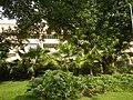 71Mehan Garden Ermita Manila Universidad de Manila 31.jpg