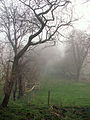 A December view of Woodnook Valley, Little Ponton, Lincolnshire, England 06.JPG