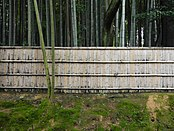 A bamboo forest.jpg