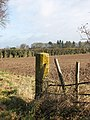 A hedgerow field boundary - geograph.org.uk - 1170019.jpg