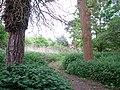 A narrow path - geograph.org.uk - 1290503.jpg