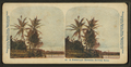 A picturesque Hawaiian railway scene, from Robert N. Dennis collection of stereoscopic views 2.png