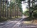 A sandy track - geograph.org.uk - 1732658.jpg