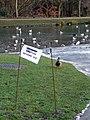 A warning for ducks - geograph.org.uk - 1747030.jpg