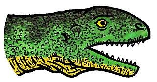 <i>Acleistorhinus</i> genus of reptiles (fossil)