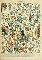 Adolphe Millot fleurs A.jpg