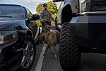 Airman's best friend—the military working dog 160816-F-CC297-0261.jpg
