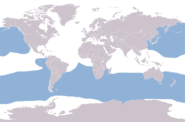 Albatrosses distribution map.png