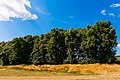 Alei de larice și tei, monument al naturii amplasat în raionul Călărași, satul Rassvet IMG 06.jpg