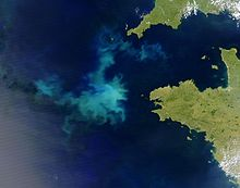 The lighter coloring of irregular patches in the Atlantic Ocean off France shows where algae are blooming.