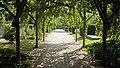 Algemene Begraafplaats Rozenburg (Zuid-Holland) (2).jpg