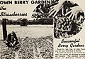Allen's 1946 book of berries (1946) (17328162704).jpg