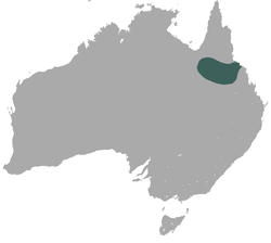 Allied rock-wallaby range