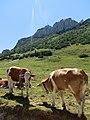 Alpenmilk -) - panoramio.jpg