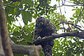 Amazon monkey.jpg