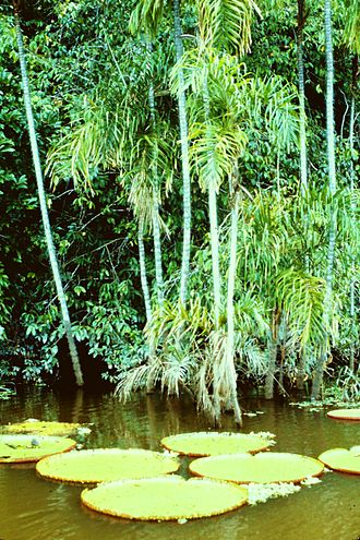 Biotope - Amazon rain forest biotope