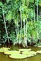 Amazon rain forest2.JPG