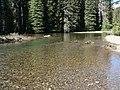 American River 16792.JPG