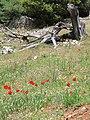 An den Hängen des Pantokrator 03.jpg