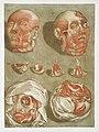Anatomical illustration by Arnauld-Eloi Gautier-Dagoty , digitally enhanced by rawpixel-com 11.jpg