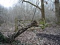 Animal head tree stump - geograph.org.uk - 1702381.jpg