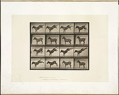 Animal locomotion. Plate 658 (Boston Public Library).jpg