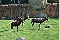 Animales bioparc-valencia-2012 (14).JPG