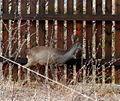 Animals13Slovakia6.JPG
