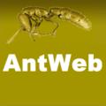 Antweb wp.png