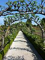 Apple tree arbour (5650010290).jpg