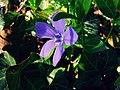 April Flowers (13784896994).jpg