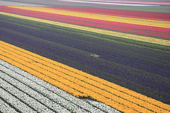 April colours in North Holland 2014-04-23-135.jpg