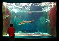 Aquarium-Muséum