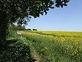 Arable field under threat^ - geograph.org.uk - 421457.jpg