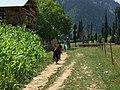 Arang Kel, Azad Kashmir, green.jpg