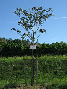 planter un arbre a son nom