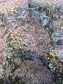 Archbald Pothole State Park - Pennsylvania (4094515527).jpg