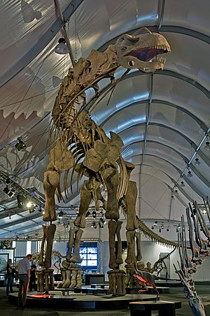 Titanosaur - Mounted replica skeleton of Argentinosaurus huinculensis, Naturmuseum Senckenberg