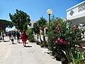 Armona Island (Portugal) - 49707670051.jpg