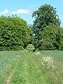 Ash Beds - geograph.org.uk - 442838.jpg